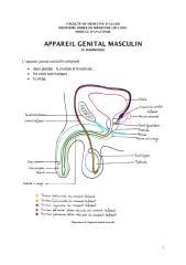 anato2an16_genital01-appareil_masculin_hammoudi.pdf