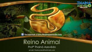 2.4 - Reino Animal PARTE 1.pdf