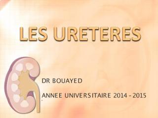 anato2an31-ureteres.pdf